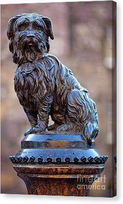 Greyfriars Bobby Canvas Print by Andre Goncalves