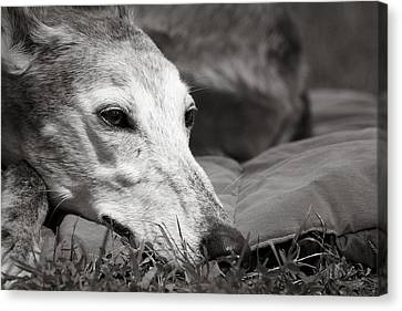 Canvas Print featuring the photograph Greyful by Angela Rath