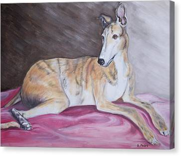 Rescued Greyhound Canvas Print - Greyhound Number 2 by George Pedro
