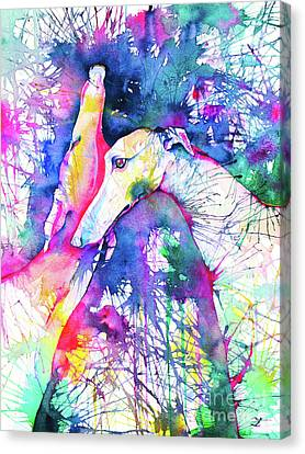 Greyhound Trance Canvas Print by Zaira Dzhaubaeva