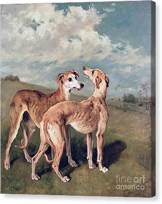 Sprinter Canvas Print - Greyhounds by John Emms
