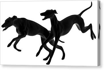 Greyhounds Travelling At 45 Mph Canvas Print by Christine Till