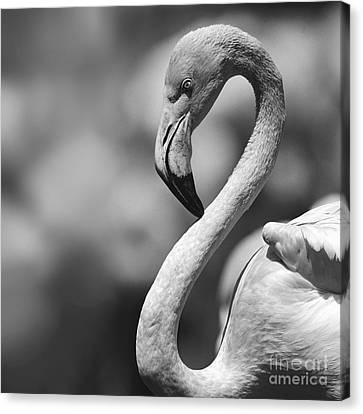 Greyscale Of A Tickled Pink Flamingo Canvas Print