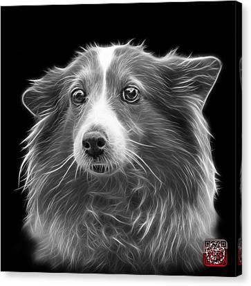 Greyscale Shetland Sheepdog Dog Art 9973 - Bb Canvas Print