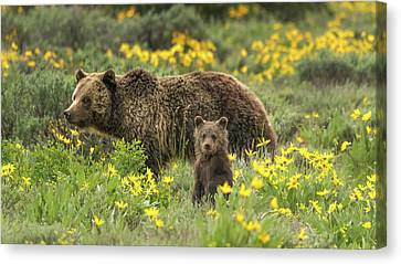 Grizzlies In The Wildflowers Canvas Print