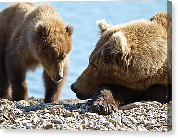Grizzly And Cub Canvas Print by Brandon Broderick