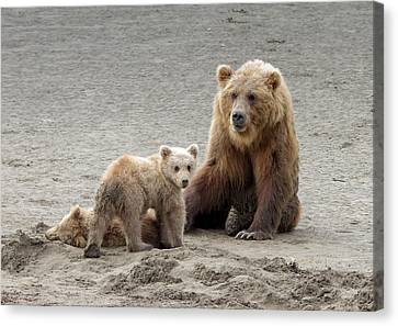 Canvas Print featuring the photograph Grizzly Family by Phil Stone