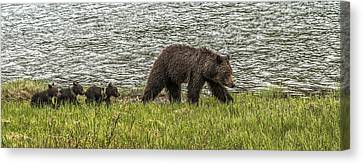 Canvas Print featuring the photograph Grizzly Family by Yeates Photography