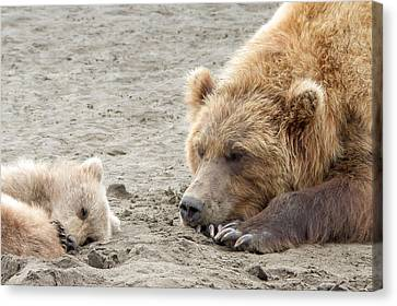 Grizzly Mom And Cub Canvas Print