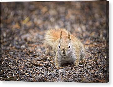 Ground Squirrel Chickaree Canvas Print by LeeAnn McLaneGoetz McLaneGoetzStudioLLCcom