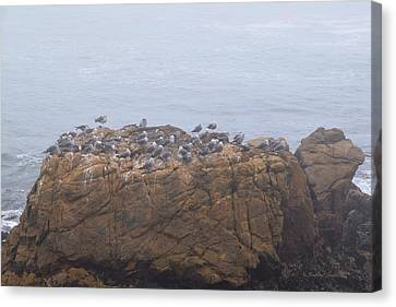 Foggy Day Canvas Print - Grounded Due To Fog Cambria California by Barbra Snyder
