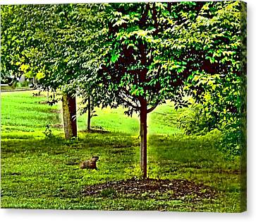 Groundhogs Day  Canvas Print by Rick Todaro