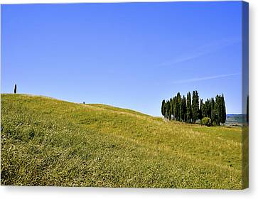 Group Of Cypresses Canvas Print by Juergen Feuerer