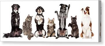 Group Of Dogs And Cats Together Begging Canvas Print by Susan Schmitz