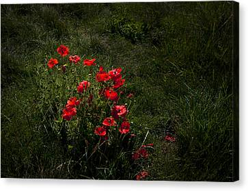 Group Of Poppies Canvas Print by Svetlana Sewell