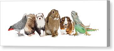 Group Of Small Domestic Pets Over White Canvas Print