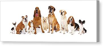 Group Of Various Size Dogs Canvas Print by Susan Schmitz