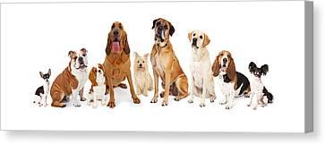 Mastiff Pups Canvas Print - Group Of Various Size Dogs by Susan Schmitz