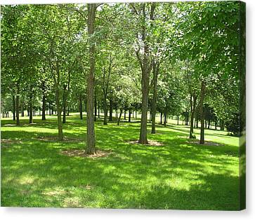 Grove Of Trees Canvas Print by Catherine Berryman