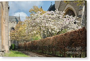 Grove Walk Cherry Blossom Oxford Canvas Print by Tim Gainey