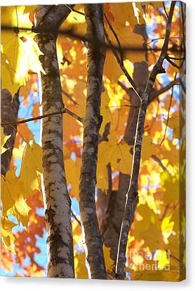 Growing Gold - Photograph Canvas Print by Jackie Mueller-Jones