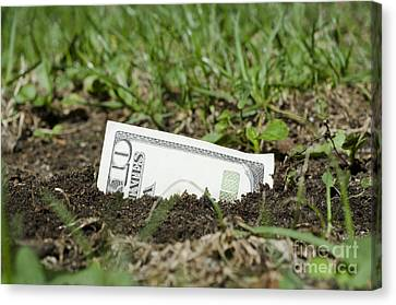 Growing Money Canvas Print by Mats Silvan