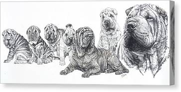 Canvas Print featuring the drawing Growing Up Chinese Shar-pei by Barbara Keith
