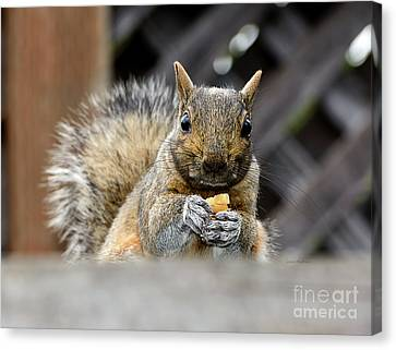 Canvas Print featuring the photograph Grumpy Squirrel by Susan Wiedmann