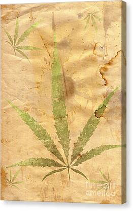 Grunge Paper With Leaf Of Grass Canvas Print by Michal Boubin
