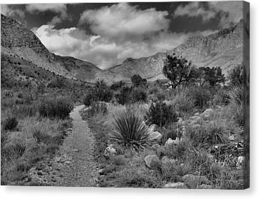 Guadalupe Mountains Morning Canvas Print by Stephen  Vecchiotti