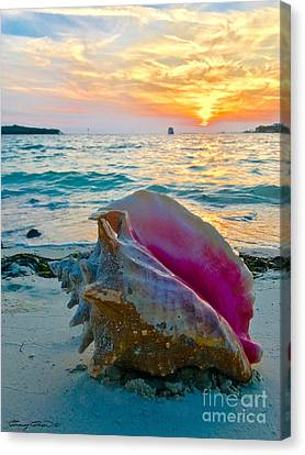 Guana Conch  Canvas Print