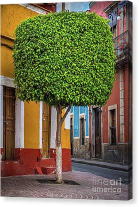 Guanajuato Tree Canvas Print by Inge Johnsson