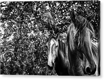Guardian Of His Mate Canvas Print