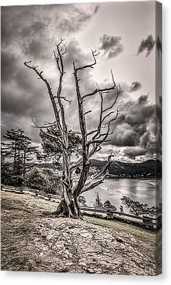 Guardian Of The Bay Canvas Print