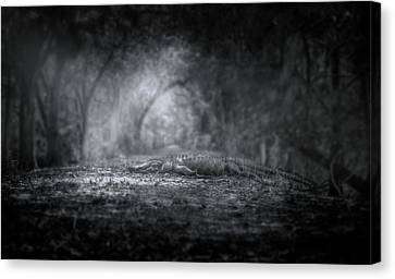 Guardian Of The Forest Canvas Print by Mark Andrew Thomas