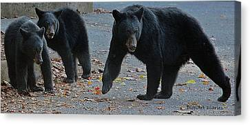 Guarding Her Cubs Canvas Print by DigiArt Diaries by Vicky B Fuller