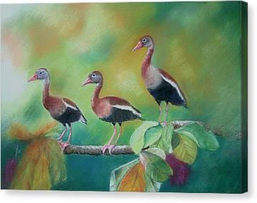 Guichichi En Guarumo Canvas Print