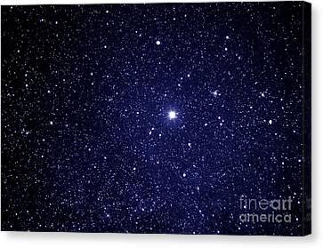 Guiding Star Canvas Print by Thomas R Fletcher