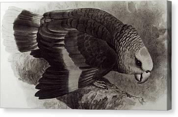 Guilding's Amazon Parrot,  Canvas Print