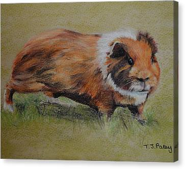Guinea Pig Canvas Print by Tanya Patey