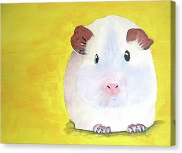Guinee Pig Canvas Print by Darren Stein