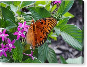 Butterfly In Motion Canvas Print - Gulf Fritillary Butterfly In Motion by Warren Thompson
