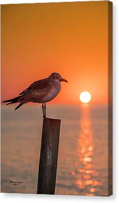 Sea Birds Canvas Print - Gull And Sunset by Marvin Spates
