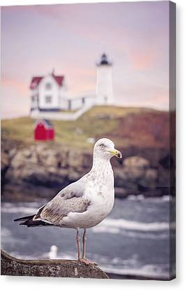 Gull At Nubble Canvas Print
