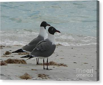 Canvas Print featuring the photograph Gull Friends by Elizabeth Fontaine-Barr