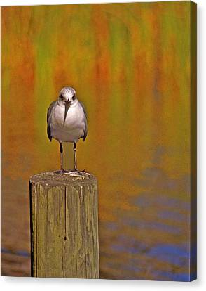 Gull On Post Canvas Print