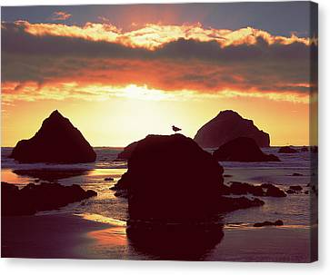 Gull On Rock Bandon Beach Sunset Canvas Print by Jim Nelson