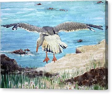 Gull On The Washington Coast Canvas Print by Stephen Boyle