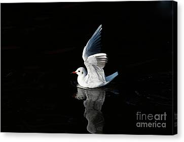 Gull On The Water Canvas Print by Michal Boubin