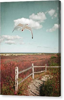 Gull Over Provincelands Trail, Cape Cod Canvas Print by Brooke T Ryan